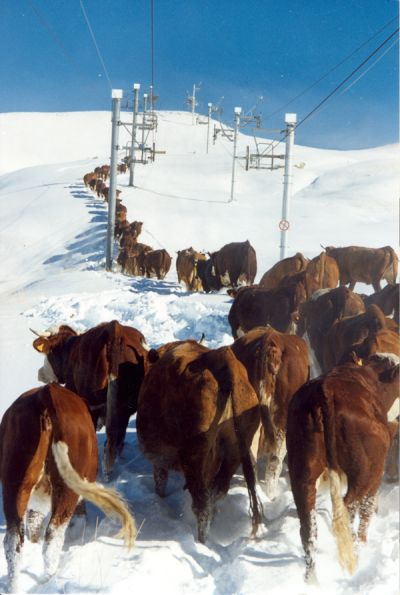 Photo - Retour d'alpage dans la neige - Copyright Fernand Leger